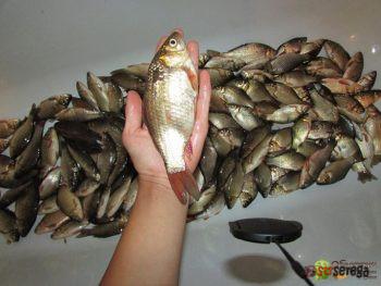 Искусственные черви для рыбалки и крепление для регистратора с Aliexpress